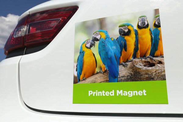 Custom Printed Magnet - The Big Display Company