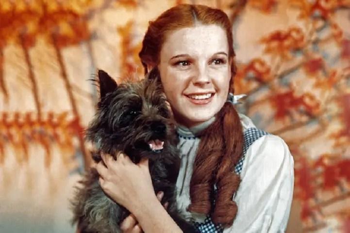 Il punto di vista del cane Toto : il Mago di Oz