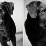 Cani anziani : un ciclo che ci emoziona e ci (in)segna