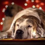 Regali solidali con cani (e altri animali)