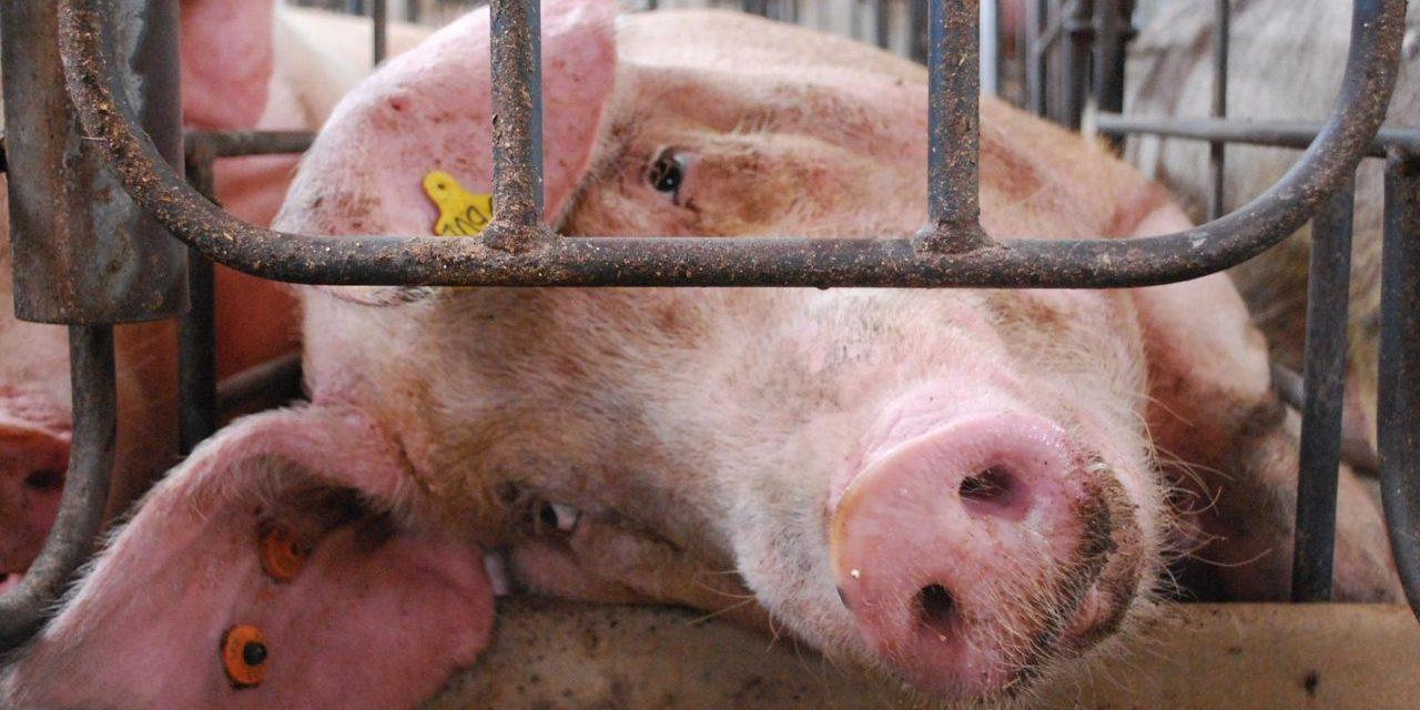 Goodbye – and good riddance – to livestock farming