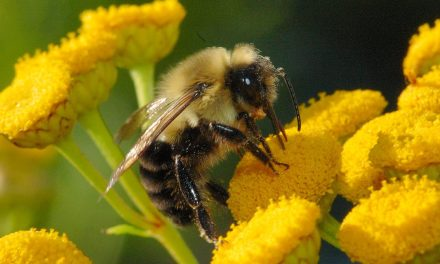 Fungicides are killing bumblebees – new research shocks scientists