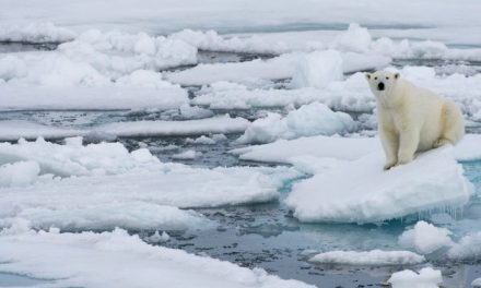 Arctic has warmest winter on record – sea ice hits record low