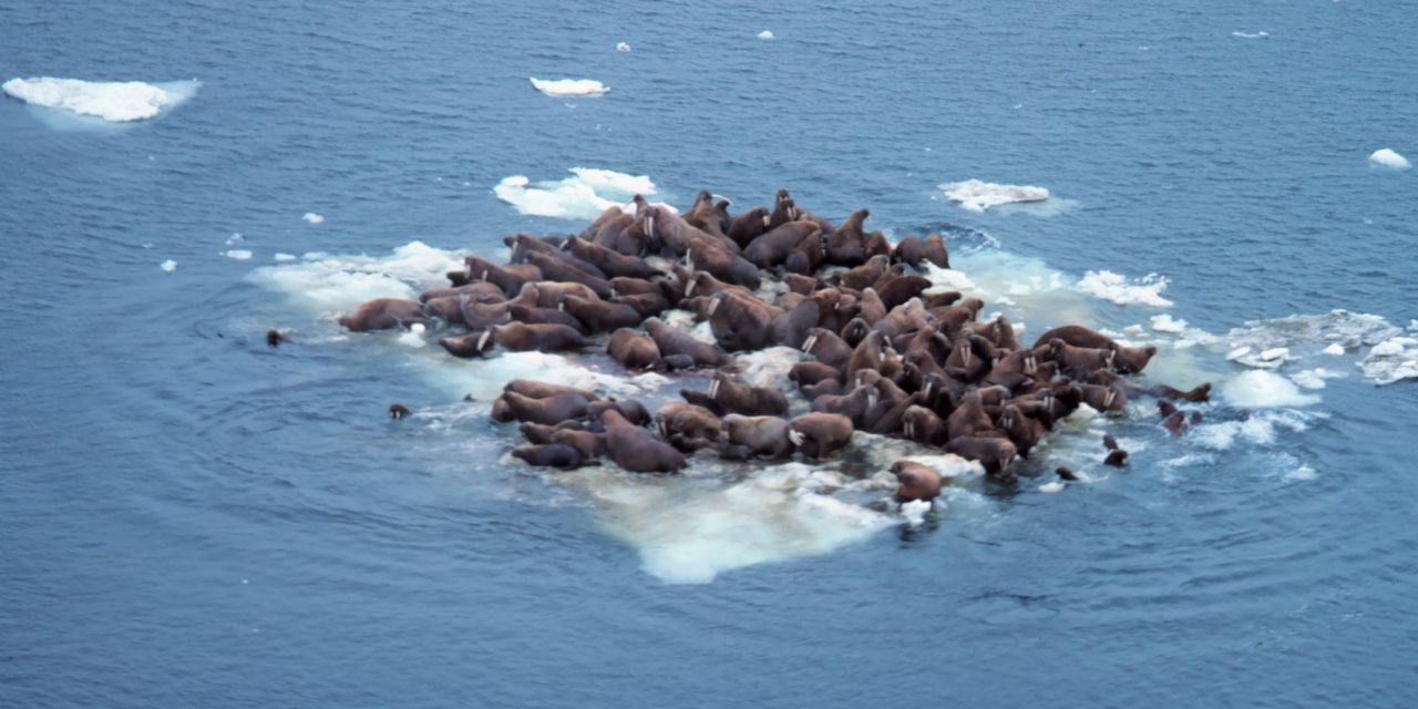 Bering Sea ice is at lowest level since at least 1850