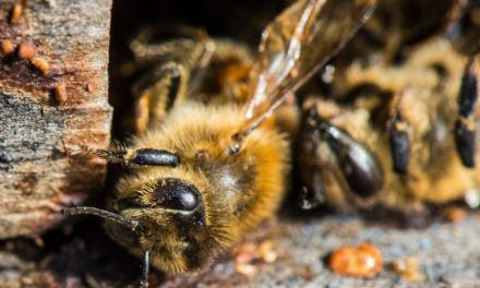 Bee‐killing neonicotinoids to be banned across Europe