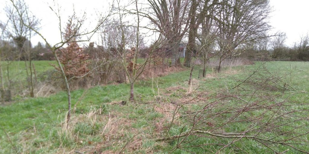 Pruning the peach trees