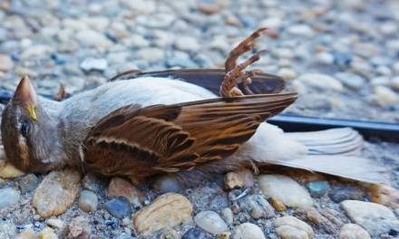 Bird species are facing extinction hundreds of times faster than previously thought