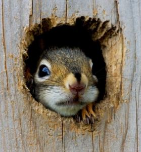 Squirrel in tree hole