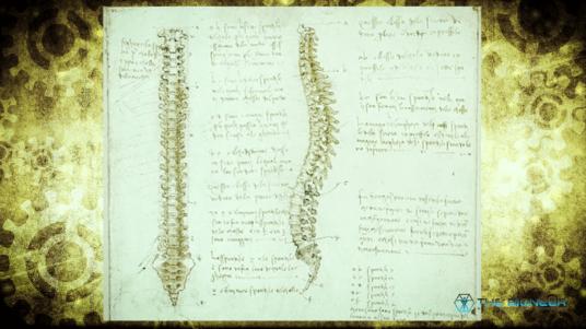 Leonardo Da Vinci Spine