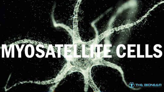 Myosatellite cells
