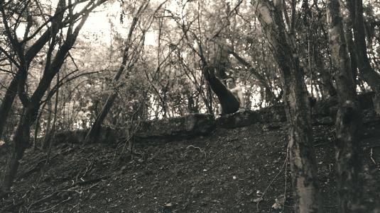 L-Sit in Woods