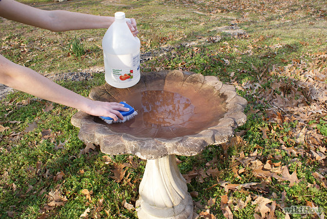 Image result for birdbath cleaning