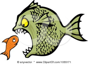 1055171-Bully-Fish-Eating-A-Small-Fish-Poster-Art-Print