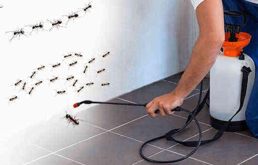 pest control Windsor