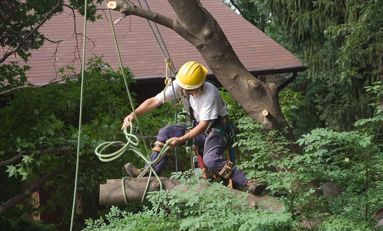 best-tree-removal-service-melbourne