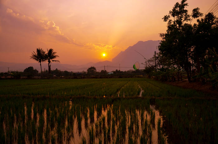 Sunset over rice fields in Chiang Dao