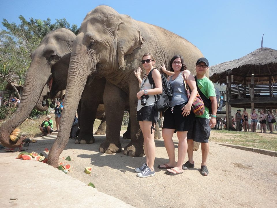 A visit in the Elephant Nature Park will make your holiday very special