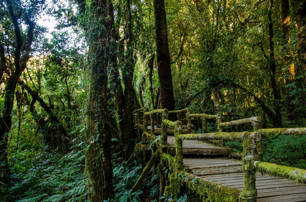Moss trail at Doi Inthanon National Park