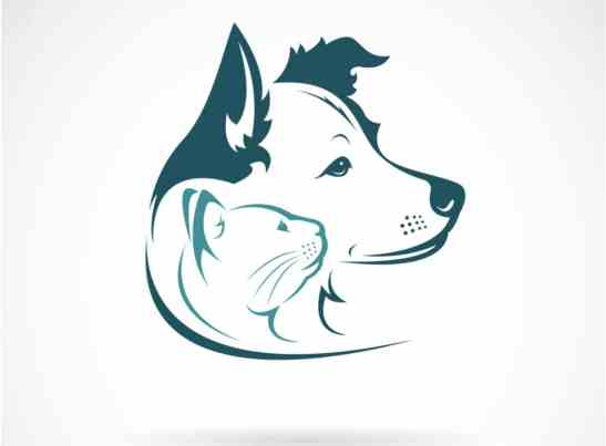 Future of Pet Care Industry in India in 2020