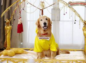 Entertainment : Barking with fun for the entire family!