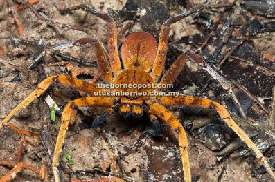 A spider which Chiam captured with his camera during a recent trip.