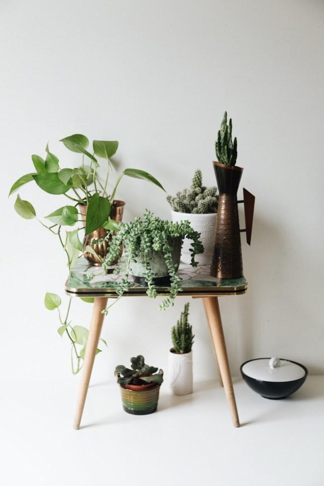 plantgang: pothos, cacti, succulents