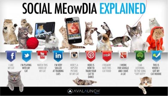 Social Media Explained With Kittens