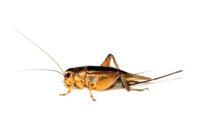 Have You Heard Crickets After Sending an Email?