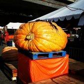 gpbf14-big-ol-pumpkin