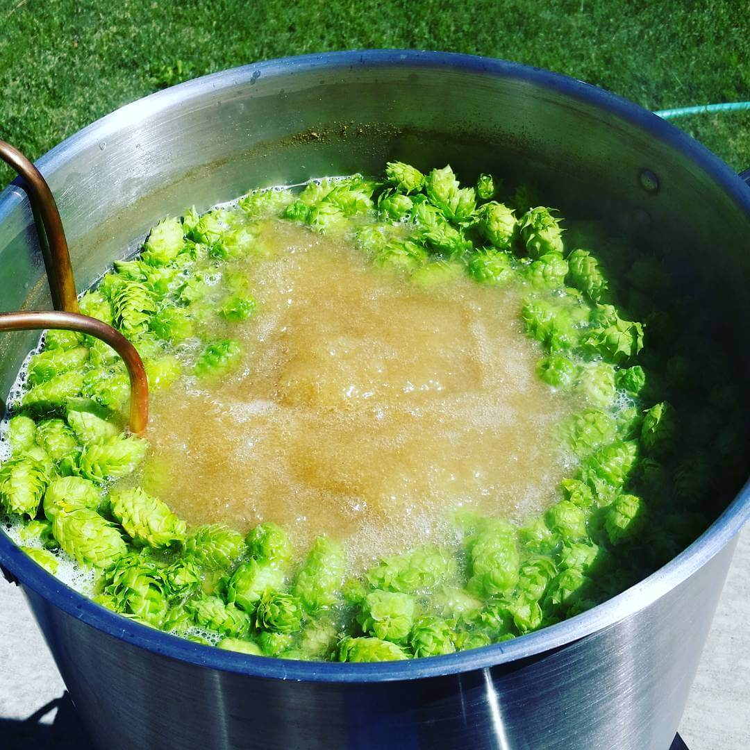 Homebrewing with fresh hops