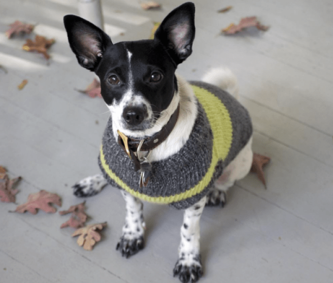 The Broke Dog: Henry's Story