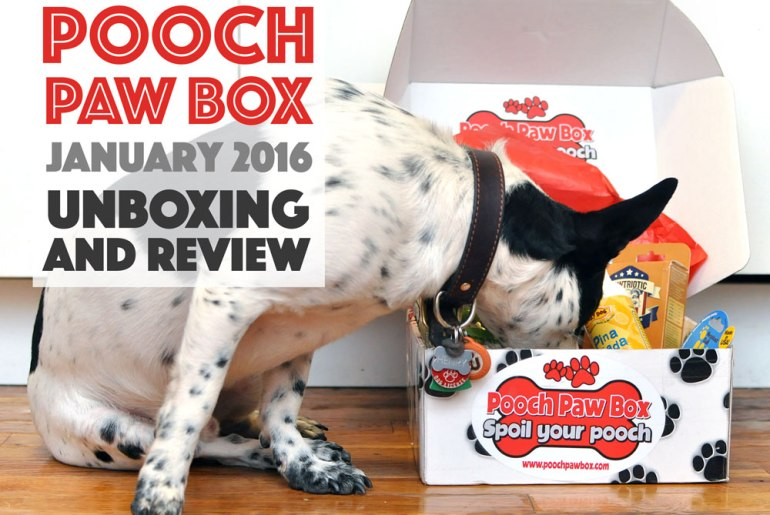 Henry and I review Pooch Paw Box, a dog subscription box service, and show you what's inside our box!
