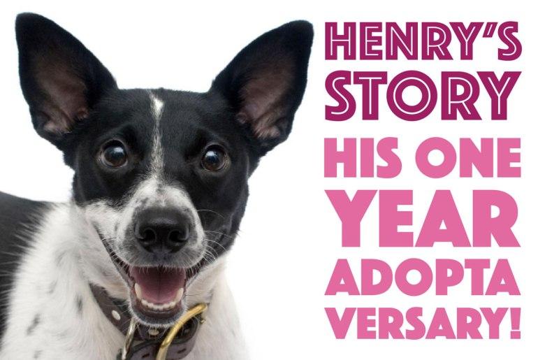 Henry's Story on The Broke Dog