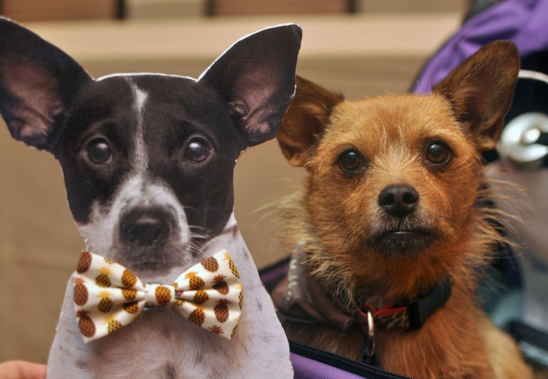 The 10 things I loved most about my first BlogPaws Conference! Flat Henry and Jada from The Chesnut Mutts.