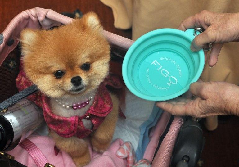 Why do I love Figo Pet Insurance? Let me count the ways...