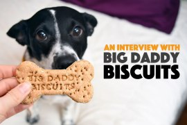 Big Daddy Biscuits makes delicious, healthy dog treats in Atlanta, Georgia — but don't take it from me, take it from Big Daddy, the namesake behind the company! We interview this cutie about his treats, the process, and his Big Mama. Check it out!