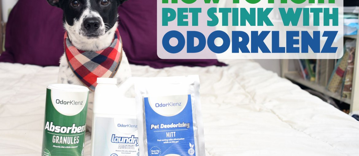 How to Fight Pet Stink With Odorklenz