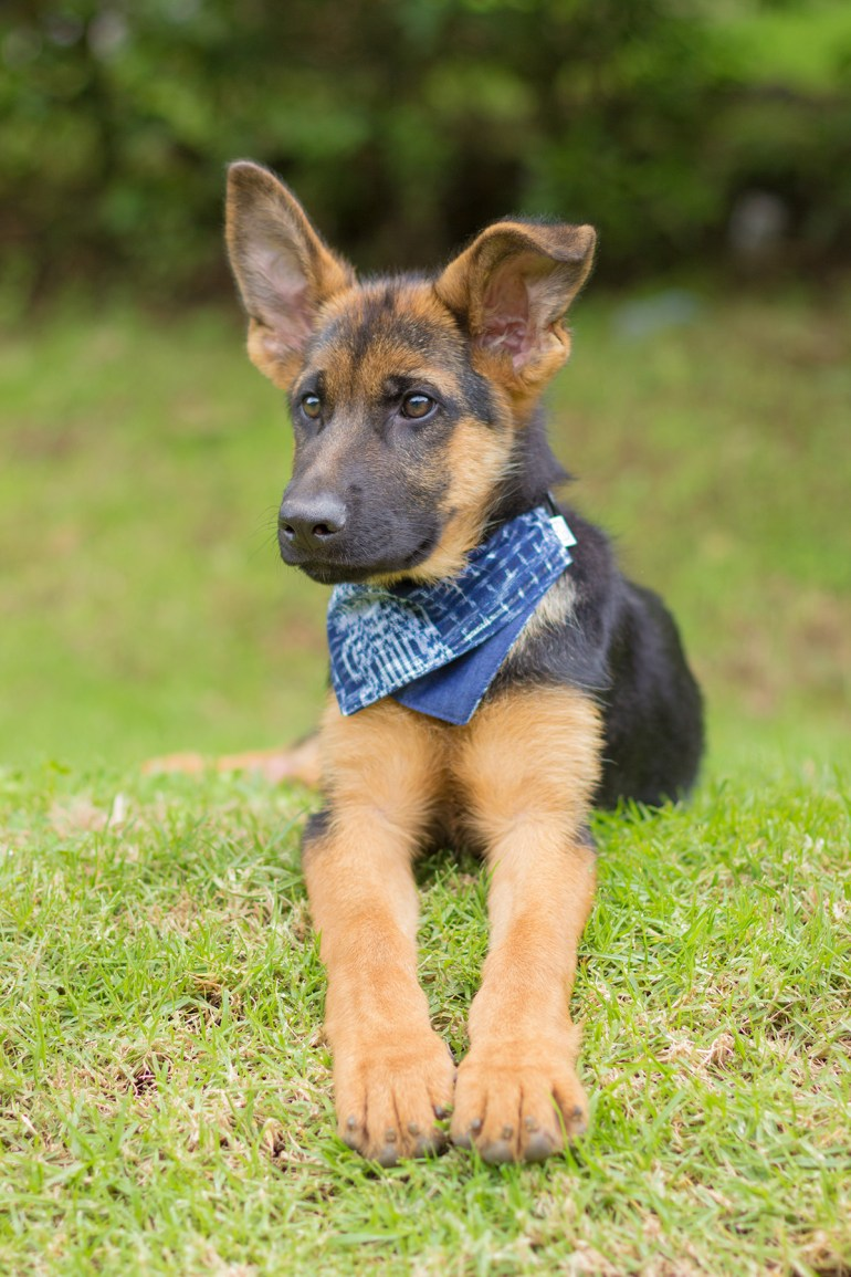 Looking for a stylish gift for a dog-loving friends? Jazal Color makes stunning dog bandanas from handwoven Guatemalan textiles. Learn more about this great company and their incredible products!