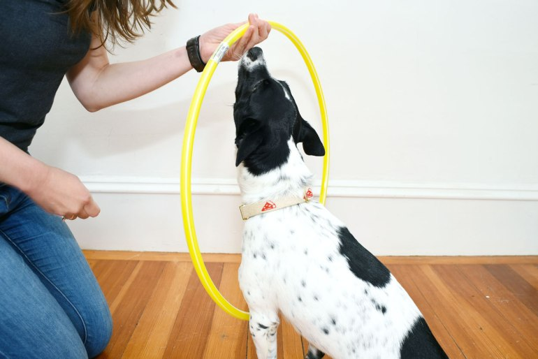 This is your chance to learn twenty new tricks while entering to win some fabulous prizes. We're going to walk you through an old classic: how to teach your dog to jump through a hoop!