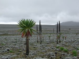 Ethiopia often suffers from famines and droughts, yet has outstanding natural beauty