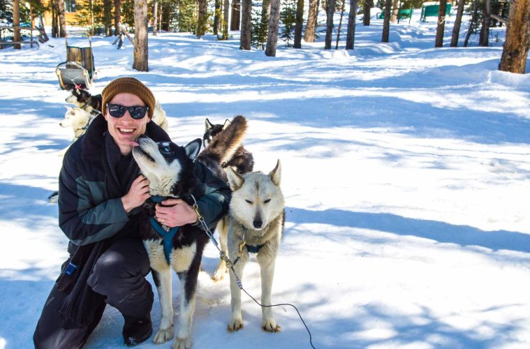 Dog Sledding in Colorado