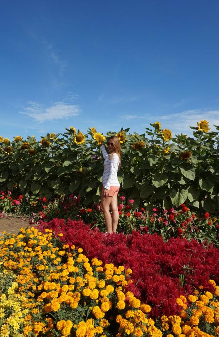 Amazing Sunflower