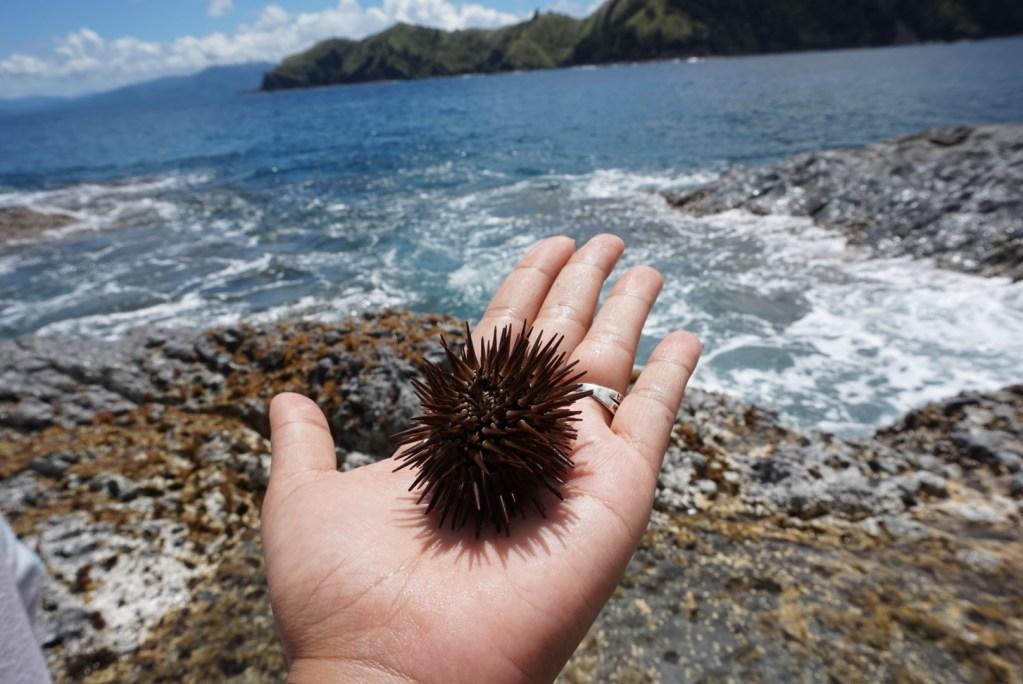 Dingalan, Aurora, sea urchin
