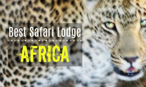 What Is the Best Safari in South Africa? | Best Value For the Money!