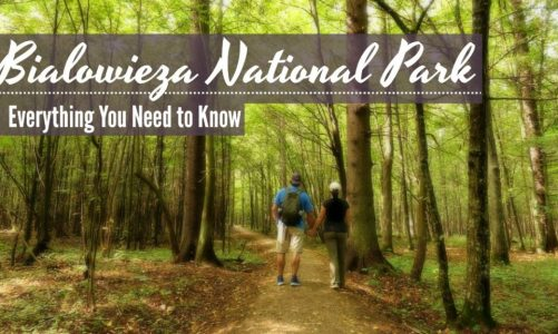 Bialowieza Forest Travel Guide and Itinerary | Best Things to Do