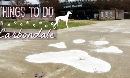 Carbondale Illinois | Best Things to Do Near Shawnee National Forest!