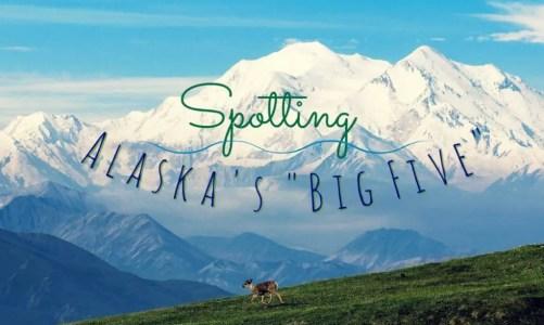 Spotting Alaska's 'Big Five' Animals on Your Alaskan Vacation