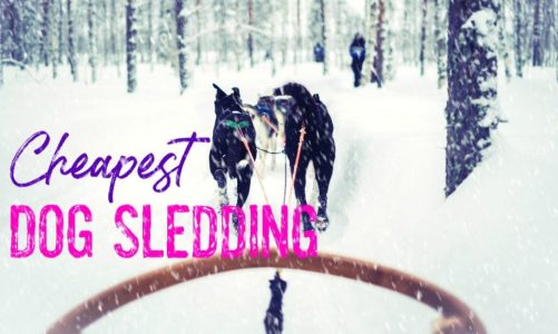 Cheapest Places to Go Dog Sledding | Ranked by Cost Per Minute