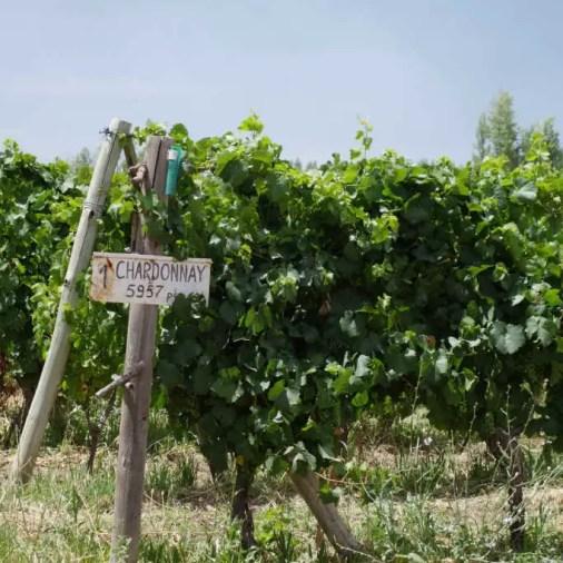 Agrestis Vineyards Best Patagonia Wine Tours