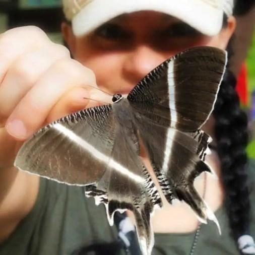 Beautiful Moth Borneo Rainforest Lodge